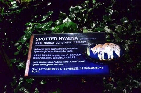 シンガポール動物園とナイトサファリの違いは?