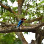 シンガポールの「サザンリッジ」で見つけた面白い鳥たち!常夏の遊歩道は暑さとの闘い…