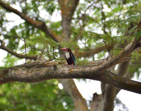 シンガポールの「サザンリッジ」で見つけた面白い鳥たち!