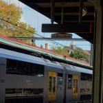 オーストラリア・シドニーの5月、秋の紅葉と街並みをレポート!