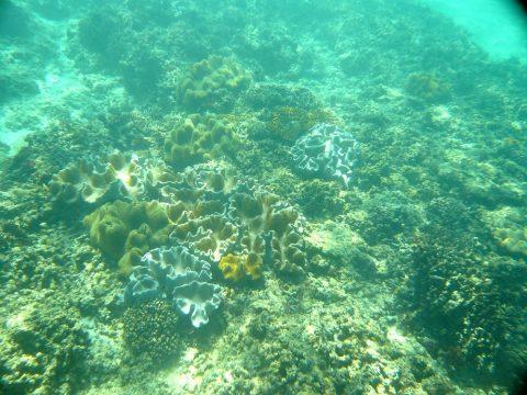 来間島の長間浜のサンゴ礁