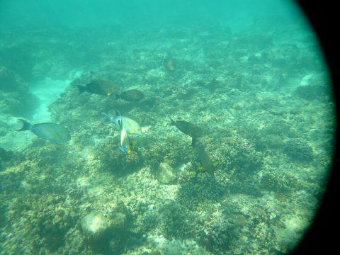 来間島の長間浜の魚