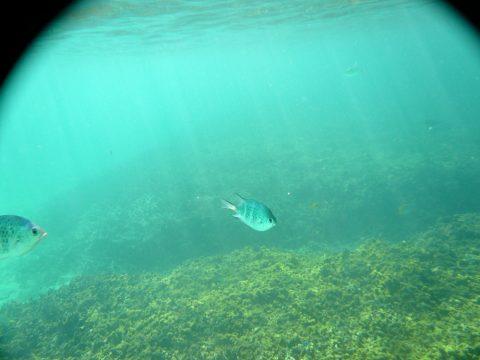 池間島フナクス(池間ブロック)の魚の量