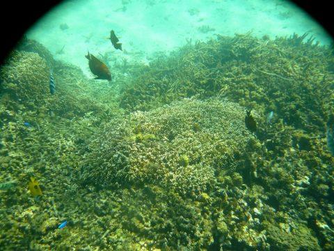 池間島フナクス(池間ブロック)満潮の様子