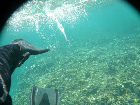 池間ロープにサンゴ礁がいっぱい