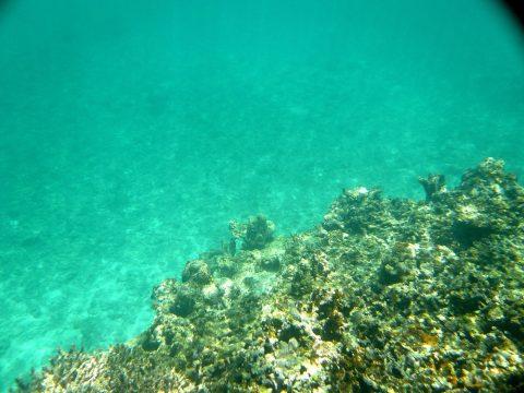 池間ロープの水の透明度