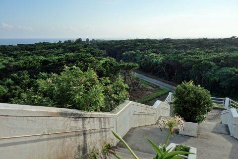 伊良部島/牧山展望台から見る原生林