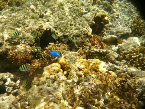 吉野海岸の魚の数