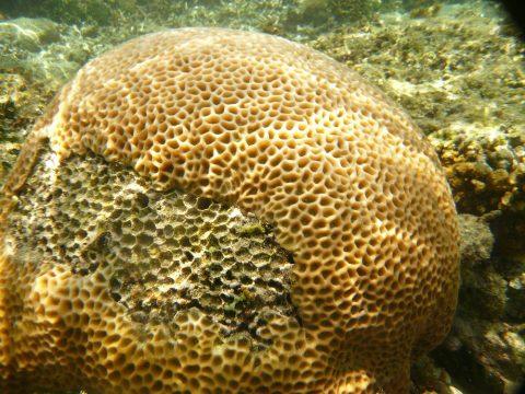 吉野海岸の巨大なサンゴ礁