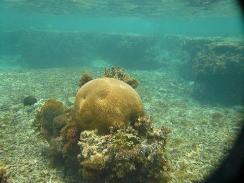 吉野海岸サンゴ礁の顔の形