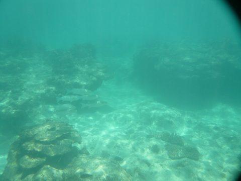 来間島のプライベートビーチ「ムスヌン浜」の水の中
