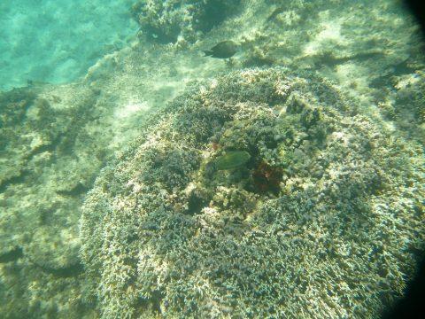 来間島のプライベートビーチ「ムスヌン浜」のサンゴ礁