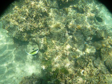 来間島のプライベートビーチ「ムスヌン浜」のツノダシ