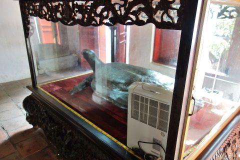 Den-Ngoc-Sonの亀