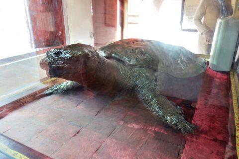 還剣伝説の大亀