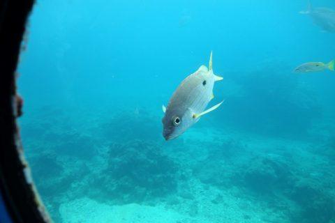 海中展望塔から見る魚