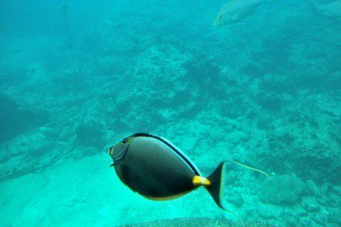 海中展望塔から見る熱帯魚