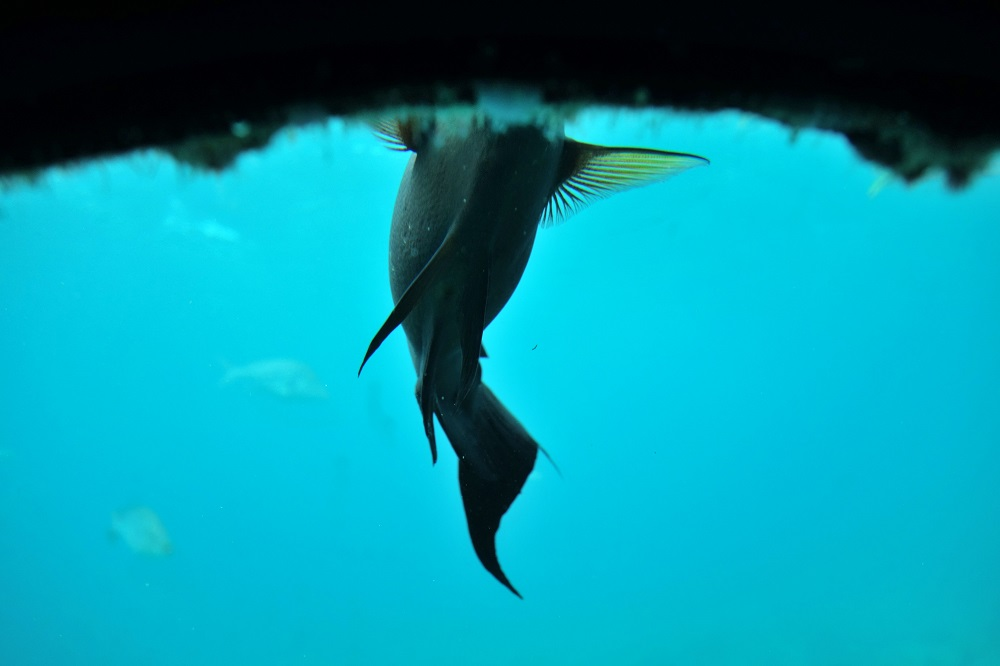 busena-marinepark (25)