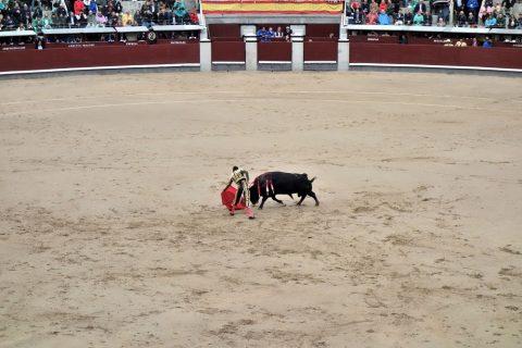 マタドールの登場/スペインの闘牛