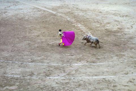 牛の力/スペインの闘牛