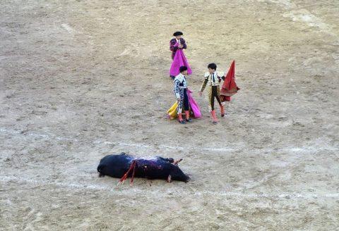 牛の死に方/スペインの闘牛
