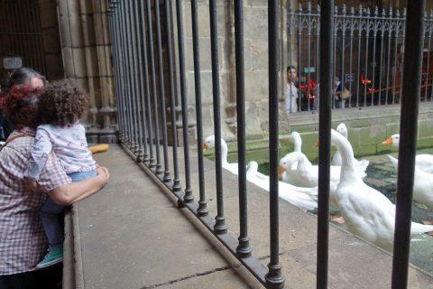 鳥/バルセロナ大聖堂