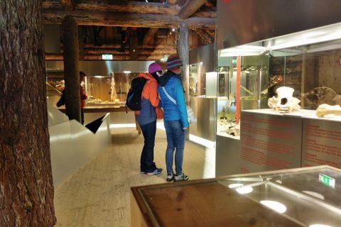 mammut-cave/博物館