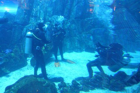 dubai-aquarium/ダイビング