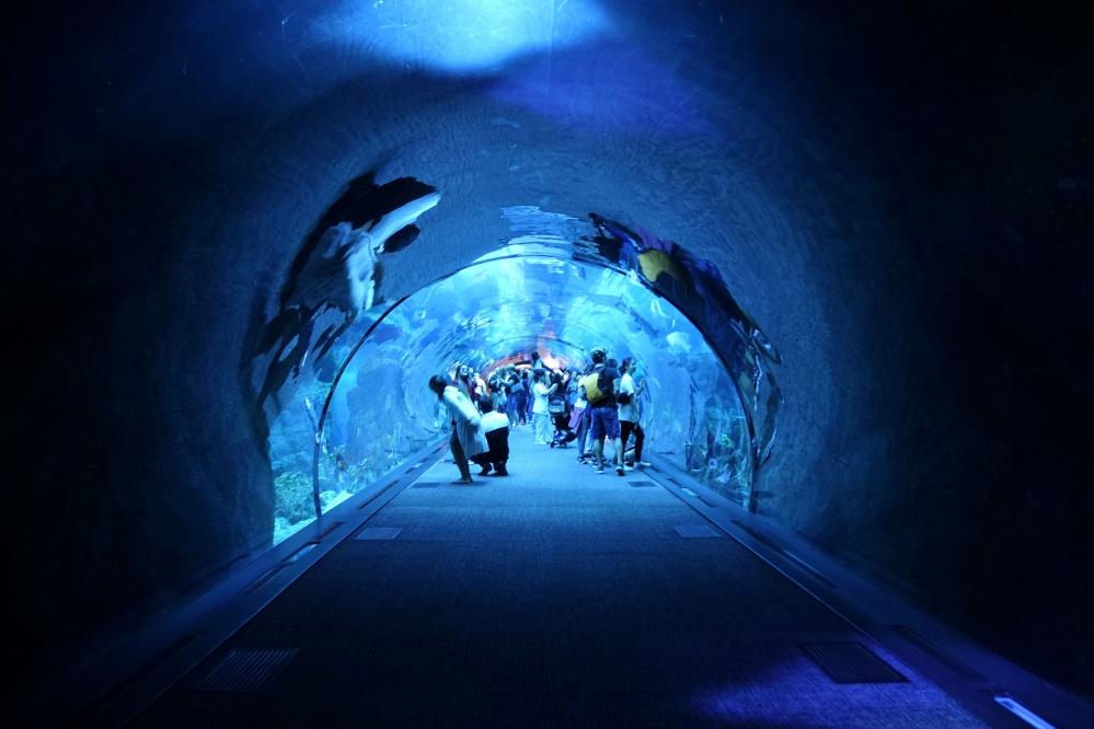 dubai-aquarium (15)