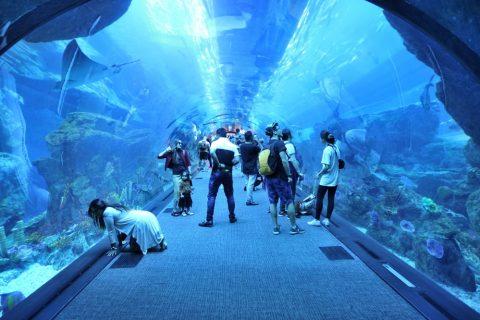 dubai-aquarium/トンネル