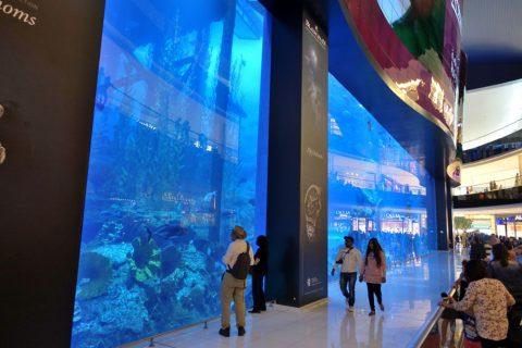 dubai-aquarium/水槽