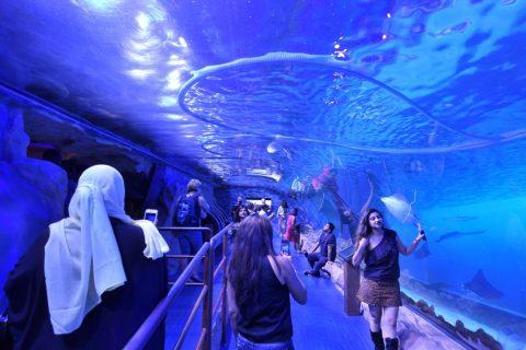 Underwater Zooのトンネル