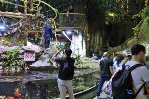 Underwater Zooのジャングル