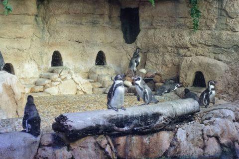 Underwater Zooのペンギン