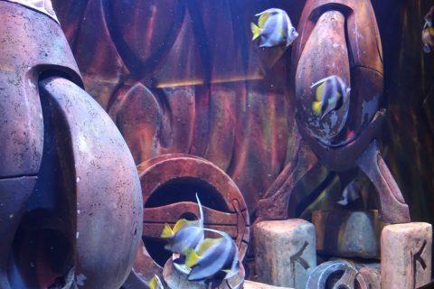 lost-chambers-aquarium/魚の展示