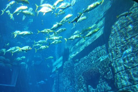 lost-chambers-aquarium/巨大な遺跡群