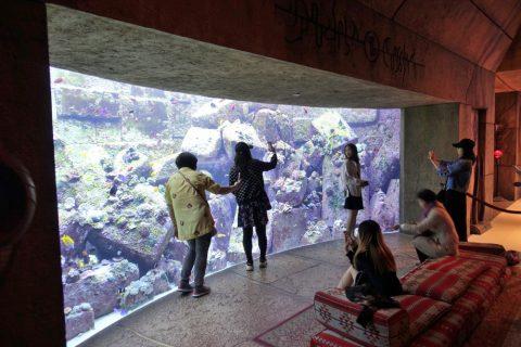 lost-chambers-aquarium/魚の数