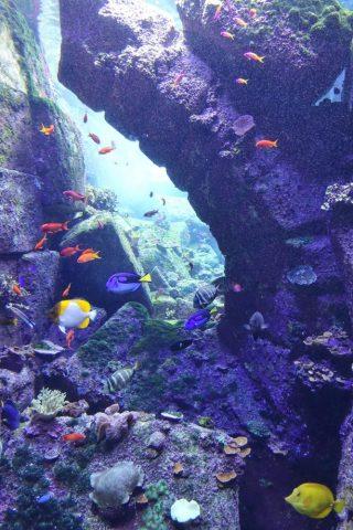 lost-chambers-aquarium/素敵な水槽