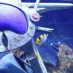 ドバイで体験!アトランティス遺跡の水族館 Lost Chambers Aquarium