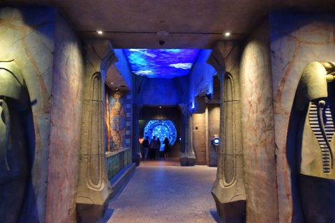 lost-chambers-aquarium/営業時間