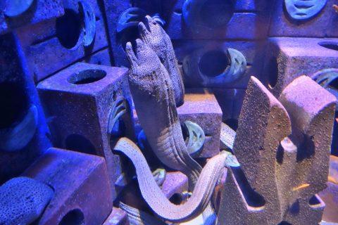 lost-chambers-aquarium/うつぼ