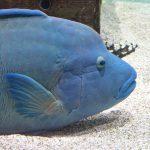 ユーモアな水族館【ニフレル】が面白い!大阪・万博記念公園エキスポシティ