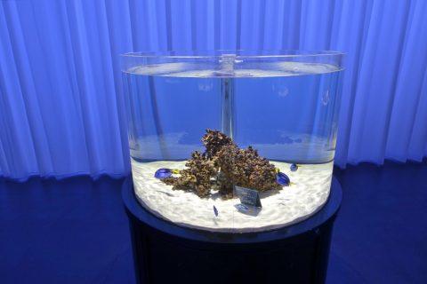 nifrel/魚の水槽