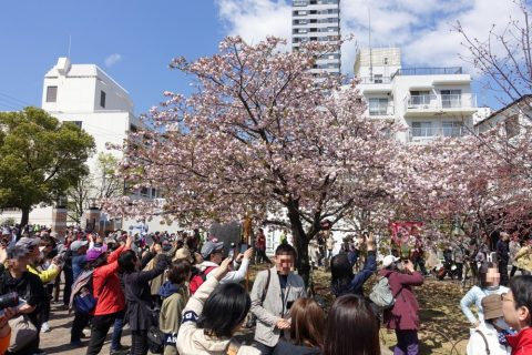 sakura-no-toorinuke/写真