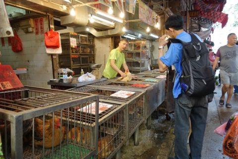 mongkok-market-hongkong/ニワトリ屋