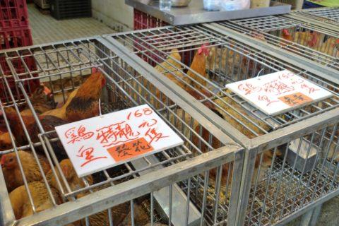 mongkok-market-hongkong/ニワトリの販売