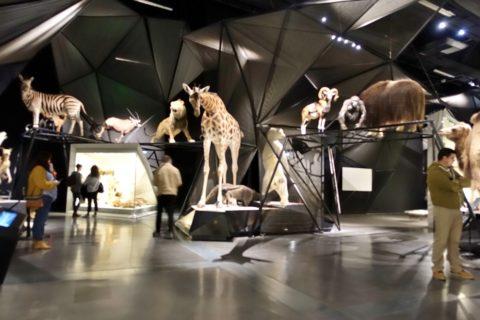 musee-des-confluences-lyon/動物のエリア