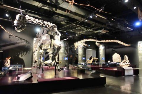 musee-des-confluences-lyon/恐竜