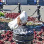 白い鳥は撮るな!ロシアの観光地で詐欺被害【犯人の顔写真付き】