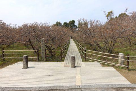 仁和寺/御室桜
